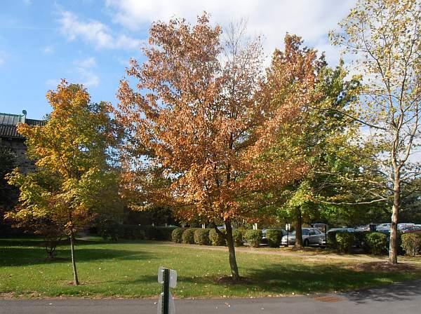 Early autumn at Maryknoll, NY